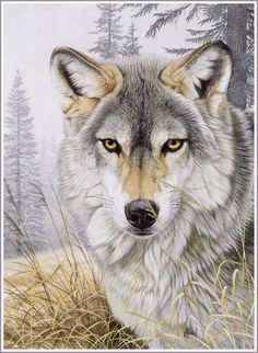 wolfs are awsome  /                                 |                                 |           cavans face   |