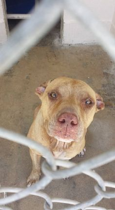 TX REMOVED FROM FACEBOOK - NO UPDATE ** ASSUMING THE WORST!!! Clewiston Animal Control  - LEFT IN DROP BOX & NOW STILL WAITING 08-24-16 .  ** She will not be here long she needs medical treatment ** FLORIDA!!!!  VERY SWEET GIRL!!!! https://www.facebook.com/ClewistonAnimalControl/photos/a.858034617653360.1073741830.823815511075271/967687206688100/?type=3&theater