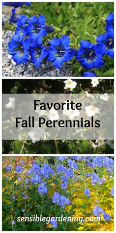 Just as we enjoy perennials that bloom in spring or summer, there are also perennials that are in their full natural glory in the fall.