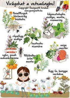 Veggie Gardens Virágokat is a veteménybe - miért? Organic Gardening, Gardening Tips, Container Gardening, Home Vegetable Garden, Herb Garden, Veggie Gardens, Types Of Herbs, Dogwood Trees, Gazebo On Deck
