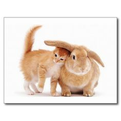 $$$ This is great for          cute_funny_animals_8  kitten bunny rabbit friends postcards           cute_funny_animals_8  kitten bunny rabbit friends postcards today price drop and special promotion. Get The best buyDiscount Deals          cute_funny_animals_8  kitten bunny rabbit friends ...Cleck Hot Deals >>> http://www.zazzle.com/cute_funny_animals_8_kitten_bunny_rabbit_friends_postcard-239674803653977195?rf=238627982471231924&zbar=1&tc=terrest