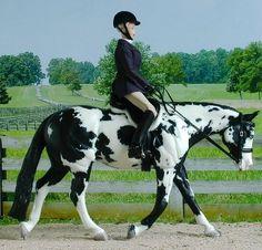 IMEHA Hunt Seat Equitation - IMEHA Guidebook