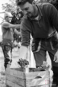 Reportage di vendemmia per Agricola Cottini in Valpolicella | Lorenzo Rui…