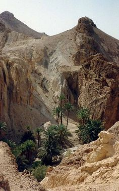 Tunisia, Tozeur   - Explore the World with Travel Nerd Nici, one Country at a Time. http://TravelNerdNici.com