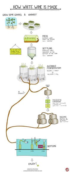 How is white wine made? See how white wine is produced with an easy-to-understand infographic. Learn the 4 basic steps on how to make white wine starting with crushing the grapes. Wine Infographic, Wine Facts, Different Types Of Wine, Wine Folly, Wine Vineyards, Wine Education, Wine Guide, In Vino Veritas, Italian Wine