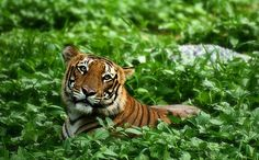 Humans to Blame for 322 Animal Extinctions in 500 Years