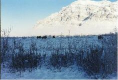 In the tundra there are very few trees and mostly short shrubbery. Trees can't grow there because the ground is frozen from 10 inches to 3 feet deep and the roots couldn't get the nutrients they needed.