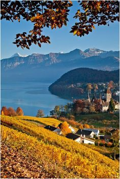 Vineyard Spiez, Switzerland