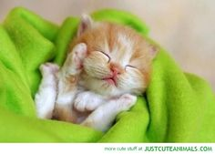 just cute animals . com
