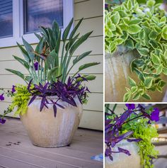 Designing The Perfect Front Porch for Curb Appeal: Front Porch Planters