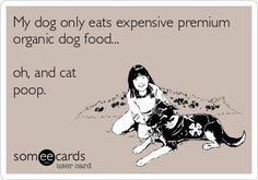 My dog only eats expensive, premium organic dog food.oh, and cat poop. Haha Funny, Funny Cute, Hilarious, Funny Stuff, Funny Animals, Cute Animals, Organic Dog Food, Funny Bunnies, I Love To Laugh