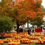 One of my very favorite New England fall destinations is the Annual Pumpkin Patch at the Epiphany Parish of Walpole on Front St. in Walpole, Mass. http://visitingnewengland.com/blog-cheap-travel/?p=1683