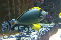 21 Blue Reef Aquarium, Fish, Pets, Animals, Animales, Animaux, Pisces, Animal, Animais