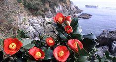 동백꽃피는과정 - Google 검색