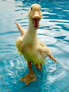 No one is happier than this duck