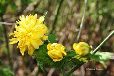 Frühlingsblüher # gelbe Blüten # Farbenreich