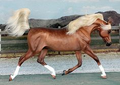 Model Horse Customizing by Ansata, What's New