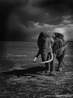 love that elephant pict