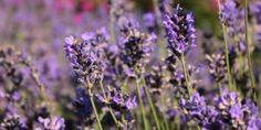 Nada como uma boa planificação para exibir permanentemente um jardim florido e uma horta cuidada. Veja as espécies botânicas e hortícolas que deve semear em cada um dos meses.