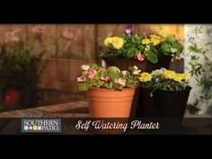 Self-Watering planters help to reduce water frequency and help to create no-hassle container gardens. Southern Patio and Chelsea Lipford Wolf from checkinginwithchelsea.com have teamed together to explain the benefits of self-watering planters.