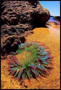 มหัศจรรย์แห่งท้องทะเล ปะการังสุดสวย