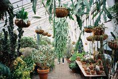 Barbican Conservatory - Samland ~ A Wonderful Place Of Make Believe