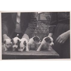 #secretsnapshots #oldphoto #foundphoto #vintagephoto #puppy #puppies #photography #blackandwhitephotography #dogs