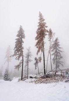 stillness is a snowy landscape Winter Scenery, Winter Trees, Winter Snow, Winter Christmas, Xmas, Landscape Photography, Nature Photography, Nature Sauvage, I Love Winter