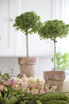 I love the cute little basil topiaries in the terracotta clay pots!  Is this something I can try making? ... FRENCH COUNTRY COTTAGE: Weekend Musings