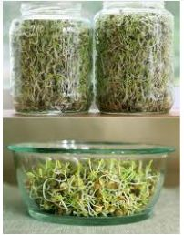 http://www.trueearthmama.org/sprouts--so-fresh-theyre-still-growing.html