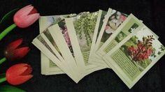 jogo Cards com texto - Florais de Bach