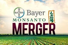 How Would a Bayer-Monsanto Merger Affect Workers Farmers Investors?