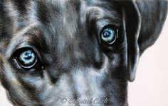 Custom Pet Portrait in colored pencil from your by CrystalCookArt