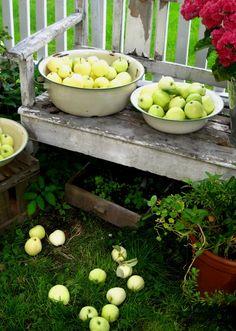 apples ♥