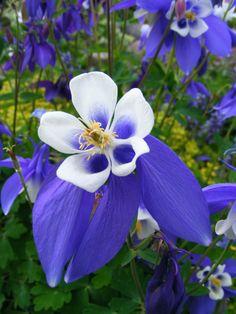 periwinkle flowers | Periwinkle_flowers%2B%282%29.jpg
