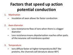 Factors that speed up action potential conduction