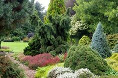 Garden. Ogród.