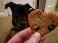 Homemade Dog Cookies with Blueberries