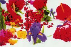 Marc  Quinn:   Iris (Winter Garden)