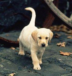 Adorable puppy exploring in Autumn!