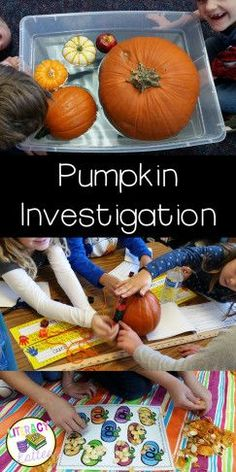 Fun and easy ideas for a first grade pumpkin investigation