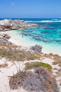 Why Rottnest Island Should Be On Your Australian Bucket List We had Rottnest Island on our Australian bucket list. After looking at these photos I think you will too! Little Salmon Bay, Rottnest Island, Western Australia Perth Western Australia, Australia Travel, Visit Australia, Tasmania, Vacation Trips, Dream Vacations, Most Beautiful Beaches, Beautiful Places, Places To Travel