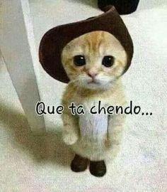 Memes en espanol mexicanos amor 22 ideas for 2019 Mexican Funny Memes, Mexican Humor, Mexican Sayings, Spanish Jokes, Funny Spanish Memes, Baby Animals, Funny Animals, Cute Animals, The Awkward Yeti