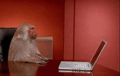 Furious monkey