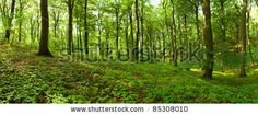 Panorama of a green summer forest by Inga Nielsen, via ShutterStock