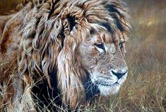 "The Warrior by Alan M Hunt Acrylic - Size 26"" x 32"" Price £POA Original Wildlife Paintings For Sale - Alan M Hunt Wildlife Paintings, Wildlife Art, Animal Paintings, Paintings For Sale, Big Cats Art, Cat Art, Lion Painting, Artist Painting, African Artwork"
