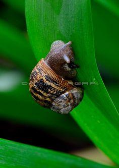 Snail | Caracol