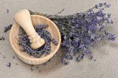 Resultado de imagem para lavender