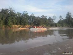 In the very early morning, as in JUST after sunrise, is the best time to spot wildlife along the Kinabatangan River!