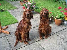 Monty and Izzy
